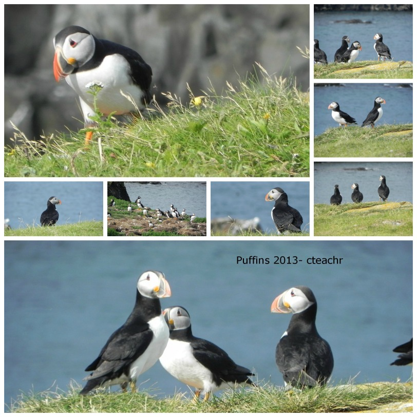 puffins collage