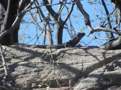 lizard at museum