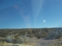 saguaro cacti becoming more numerous