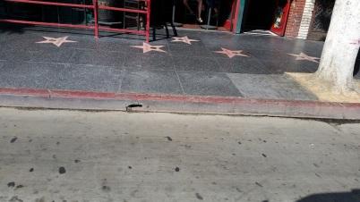 hollywood stars 2
