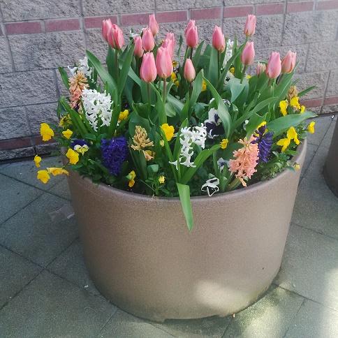 rec centre flowers