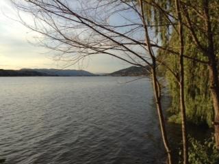 swan lake 3