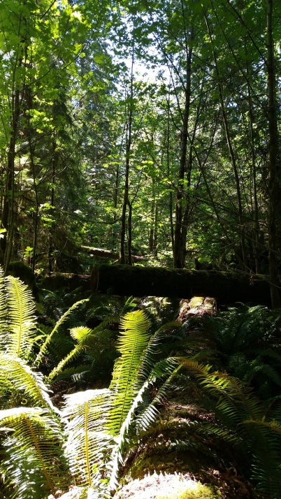 cathedral grove2