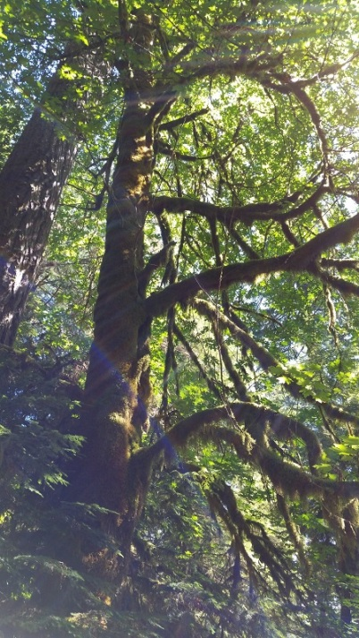 cathedral grove3