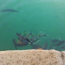 venetian-harbour