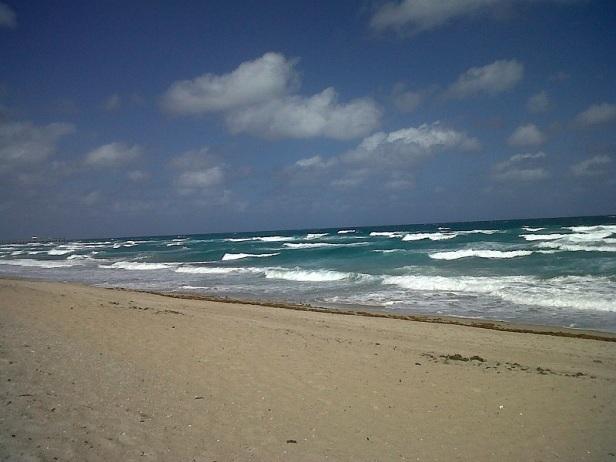 palm beach5