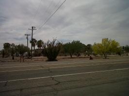desert blooms arizona1