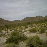 desert blooms arizona2