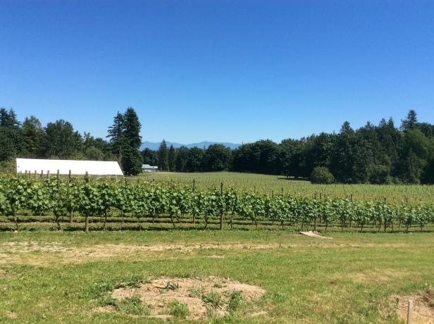 singletree vineyard